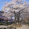 【遊歩道・坂】文京区小石川5丁目:播磨坂