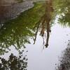 湿地帯を好む
