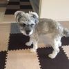 #愛犬ラブへ。 虹の橋でアイボちゃんを見つけてあげてね!(削除ブログ復活②)