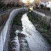 善福寺川の早朝散歩。日の出が早くなってきたので、「暗闇」は脱却です。