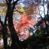 勝俣部長の「高尾登山と健康体質作り」437・・・・何はともあれ「健康」で