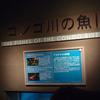 2019/8/25 コンゴ川の魚IIに新展開!!