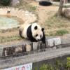 【子連れ】パンダに会いにいこう!神戸 王子動物園