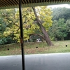豊橋市の未来、豊橋市の自然環境の未来・・・。 その2