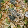 豚肉とゴーヤ、エリンギの自家製味噌炒め