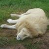 南アフリカで動物たちと触れ合う