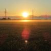 夏の朝 陽の光を浴びて・・・