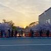 桜と夕日。