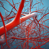 NHKガッテンの「冷え性」を改善するには血管伸ばしのストレッチを!