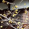 3月の「尼僧と学ぶやさしい仏教講座」は3月11日に行います。テーマは「仕事の悩みと仏教」です。