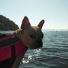 猪苗代湖でキャンプとカヌー vol.4
