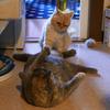 猫たちの取っ組み合い?喧嘩?がひどい!2匹目を迎えて9ヶ月半たったわが家を分析