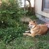 犬の肺癌。呼吸の様子に一喜一憂してしまいます。