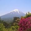 絶景!富士の樹海(青木ヶ原)のハイキングコース【山梨・富士西湖】