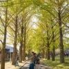 【いちょうまつり】銀杏並木・組子コースター体験・軽トラガーデン