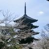 桜三昧〜♪