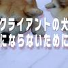 動画編集者が語る/モンスタークライアントの犬にならないために。