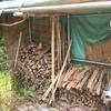 2021年版「薪って、どうすればいいのかな?」―犬山里山学研究所における原木提供に関しまして
