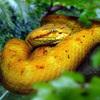 世界で一番危険な蛇が住む島「ケイマーダ・グランデ島」