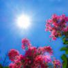 夏の残り日 花の日傘で涼をとり