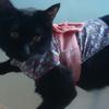 今日の黒猫モモ&白黒猫ナナの動画ー519