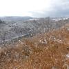 初雪が降ったので、近所の土手で、野鳥を撮影。