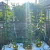 秋冬野菜の準備開始!