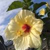 [ハワイ留学] 現役大学生の毎日日記 4月10日
