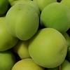梅の収穫、そして、ココナッツシュガーってどうなの?