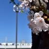 春ということで(泉北線×桜)など