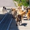 猫島が福岡県にある!猫が大量毒殺された馬島の魅力とは?