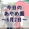 【あやめまつり】今日のあやめ園~6月2日~