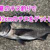夏のチヌ釣りで42cmのチヌをゲットした!