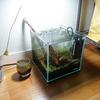 思った程苔も出ない。水草一番サンド 20cm水槽 6日目