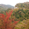 秋の石鎚山と面河渓の樹木観察ツアーはいかが?