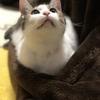 【猫ブログ】猫に関する資格とは!