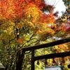 【京都】【御朱印】嵐山、『野宮神社』に行ってきました。 京都観光 京都旅行 女子旅 主婦ブログ
