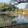 もえぎ野公園の池(神奈川県横浜)
