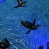 すみだ水族館/ペンギンの赤ちゃん