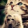 段ボールに入れられ捨てられていた猫の赤ちゃん…