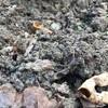 畑【実験報告】想いと祈りで土は変わる。
