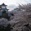 石川門と桜