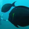 バリ島旅行⑨「バリ島トランバンで沈没船ダイビング」