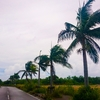 いっぱい台風が来るのに、なんで沖縄は被害が少ないの?