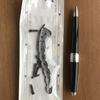 先代・柳朝師匠の「粗忽の釘」