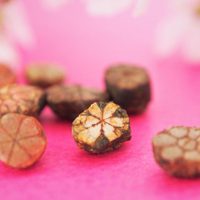 桜が一年中咲いている場所!? 京都・亀岡の桜天満宮と「桜石」
