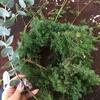 なぜクリスマスのリースは丸い輪になっているのか?~生花の手作りリースにチャレンジしました!