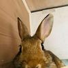 ウサギのちまき、ダッシュからのラストは飛び蹴りっ♪(動画)