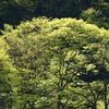 飛騨の春景色 【R41なぎさ付近 vol1】