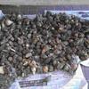 里芋ゴロゴロ 予想に反して大収穫でした。来年用に種芋にできないか。